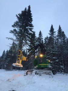 First tree cut on NP Jan 2015